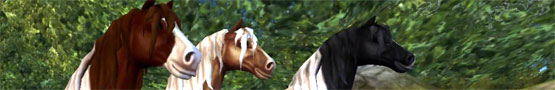 Online Paarden games - Horse Games on WWGDB