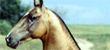 Critically Endangered Horse Breeds preview image