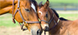The Role of Genetics in Horse Breeding Part I preview image