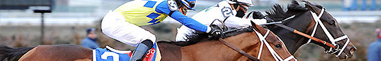 Handicaps in Horse Racing preview image