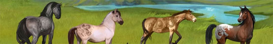 Horse Games Online - How to Take Care of Your Foal in Howrse
