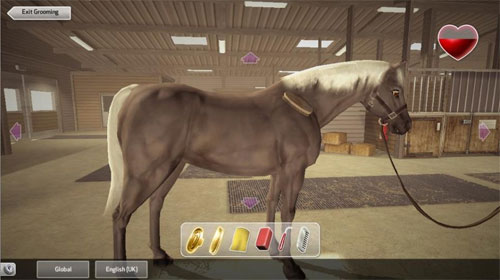 Caring for Your Horse in Riding Club Championships