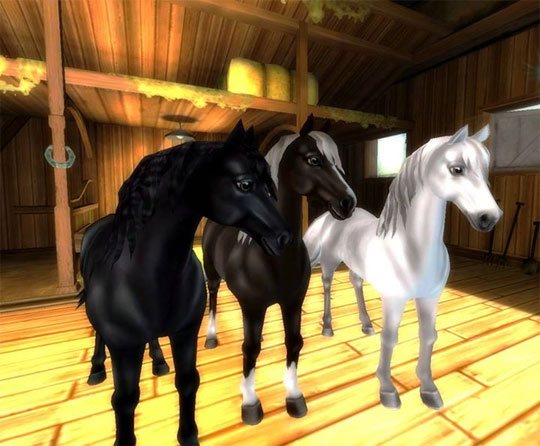 Morgans arriving in Star Stable