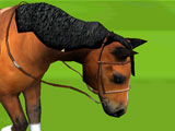 Gameplay for Horse Racing 3D