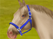 Horse World Online game