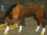 Your Stable in Horse Quest Online 3D