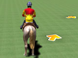 Show Jumping: Training Course
