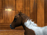Little Baby Horse gameplay