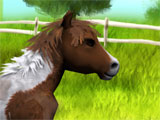 Little Baby Horse beautiful environment